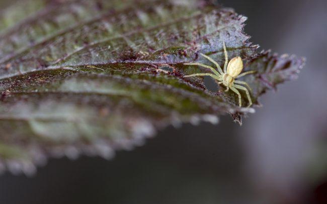 Animaux, Araignée, Araniella cucurbitina, Faune & Flore (Autre), Insectes