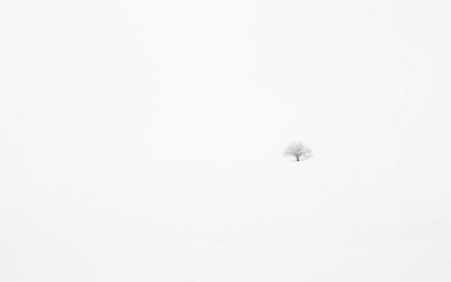 Arbre, Brouillard, Brumes, Concept, Faune & Flore (Autre), Montagne, Neige, Paysage