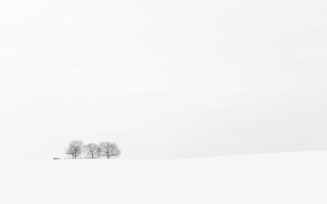 Arbre, Concept, Faune & Flore (Autre), Neige, Paysage