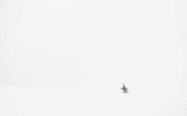 Arbre, Concept, Faune & Flore (Autre), Montagne, Neige, Paysage
