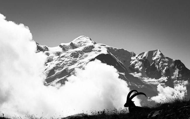 Alpine Ibex, Artiodactyla, Artiodactyles, Bouquetin, Bouquetin des Alpes, Bovidae, Bovidés, Capra ibex, Concept, Faune, Mammalia, Mammals, Mammifères, Montagne, Neige, Paysage