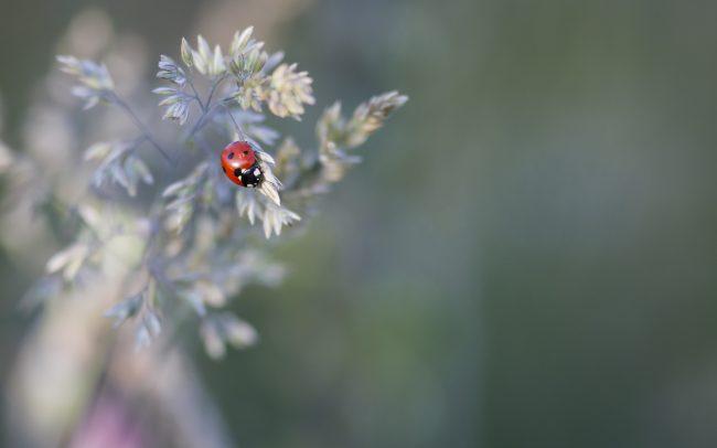 Animaux, Coccinelle, Faune & Flore (Autre), Insectes