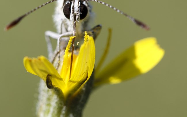 Animaux, Faune & Flore (Autre), Insectes