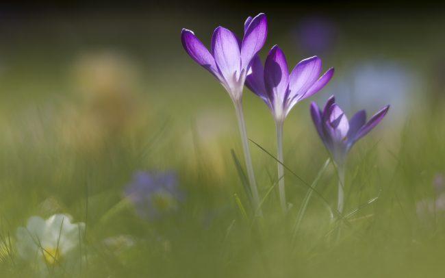 Concept, Fleur, Fleurs, Printemps, Saisons