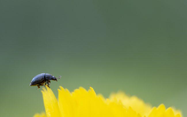 Animaux, Faune & Flore (Autre), Insectes, Scarabé