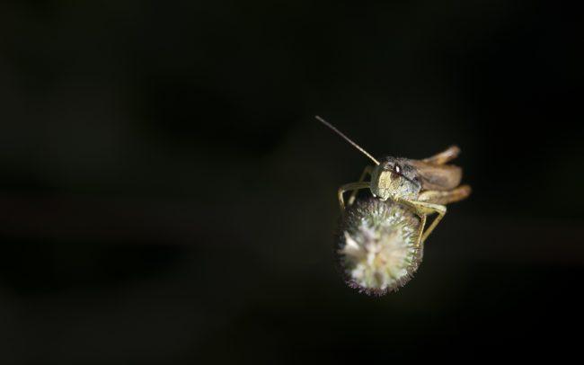 Animaux, Criquet, Faune & Flore (Autre), Insectes, Montagne, Paysage